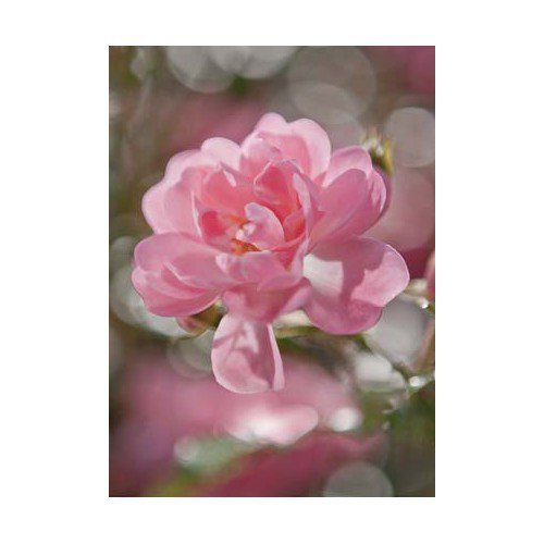 Fototapeta Bouquet  4-713