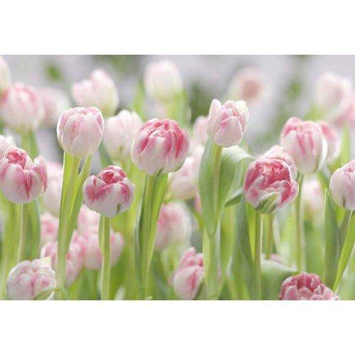 Fototapeta Secret Garden  8-708