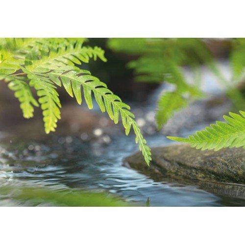 Fototapeta Along the River 1-611