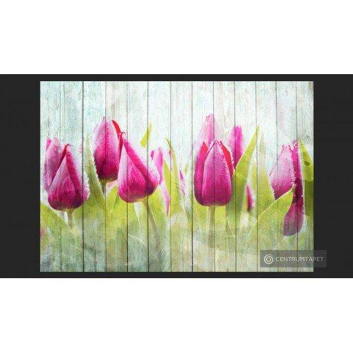 Fototapeta Tulipany na...