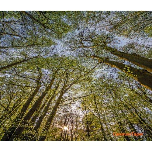 Fototapeta Canopy 4-522