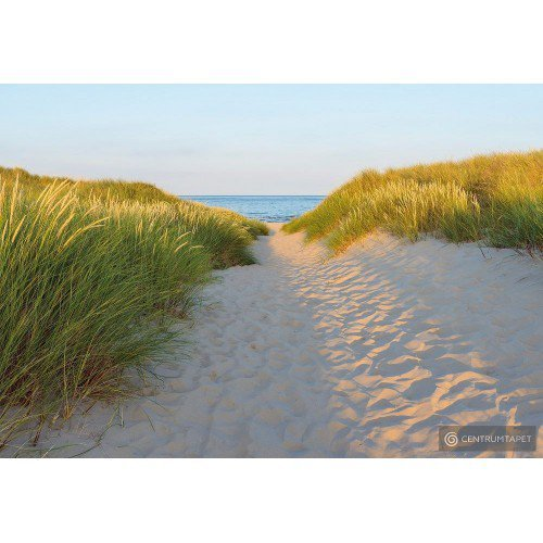 Fototapeta 8-995 Sandy Path