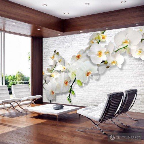 Fototapeta Orchidee na ścianie b-A-0089-a-b