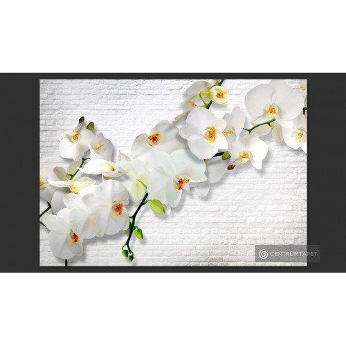 Fototapeta Orchidee na...