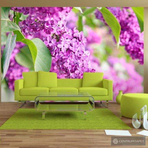 Fototapeta Kwiaty bzu b-A-0005-a-b
