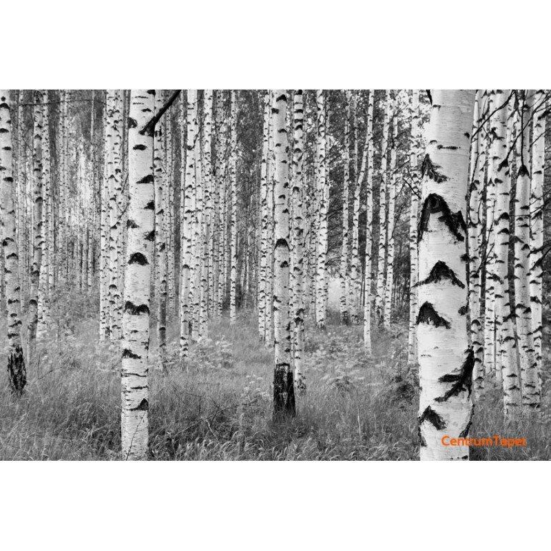 Fototapeta Woods XXL4-023