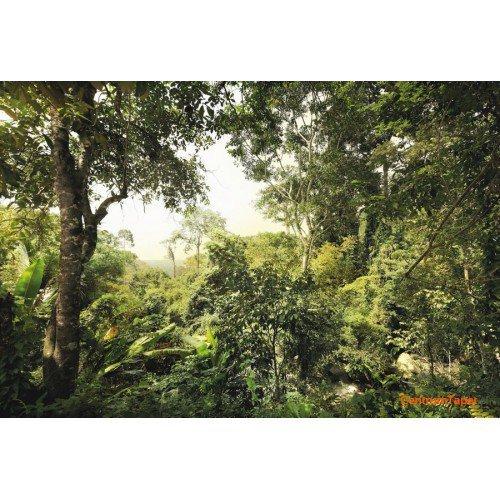 Fototapeta Dschungel XXL4-024