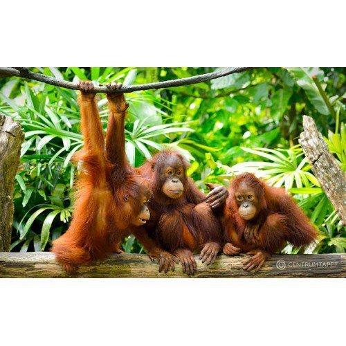 Fototapeta 3577 Trzy małpy