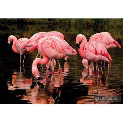Fototapeta 3616 Flamingi