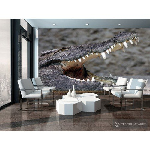 Fototapeta 3620 Krokodyl