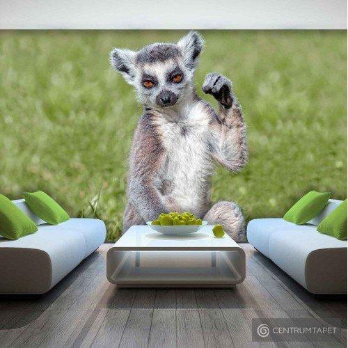 Fototapeta 3623 Lemur