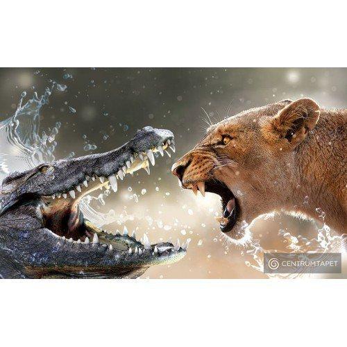 Fototapeta 3643 Krokodyl vs Tygrys