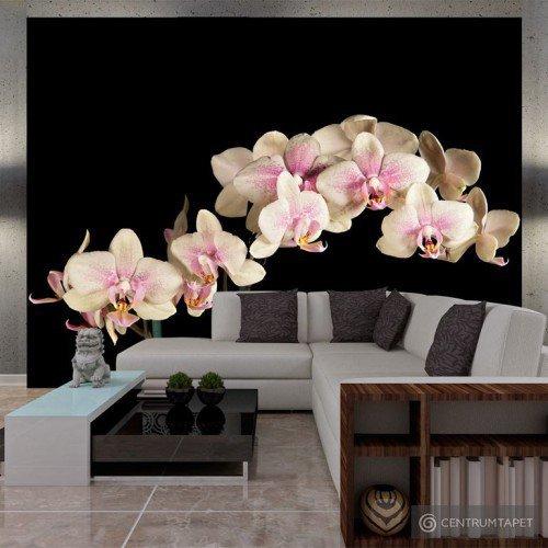 Fototapeta 100406-40 Kwitnąca orchidea