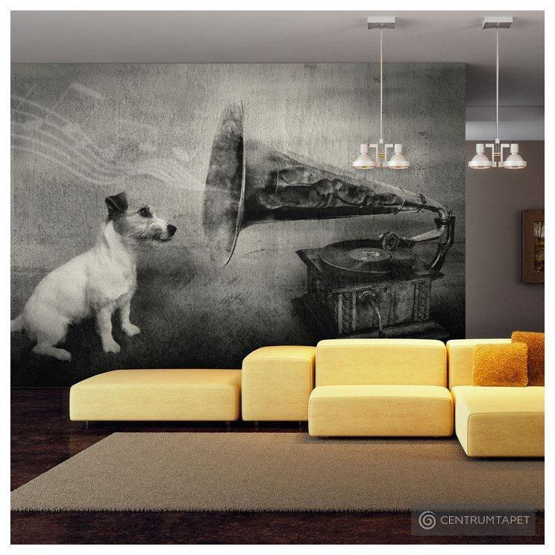 Fototapeta 100407-54 Dog's melodies