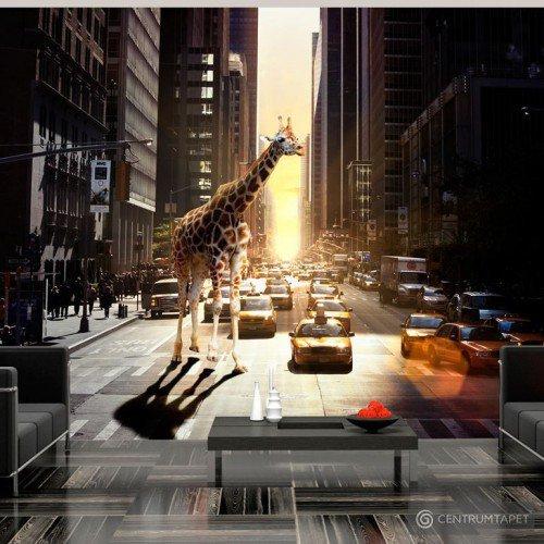 Fototapeta Żyrafa w wielkim mieście 10040901-29