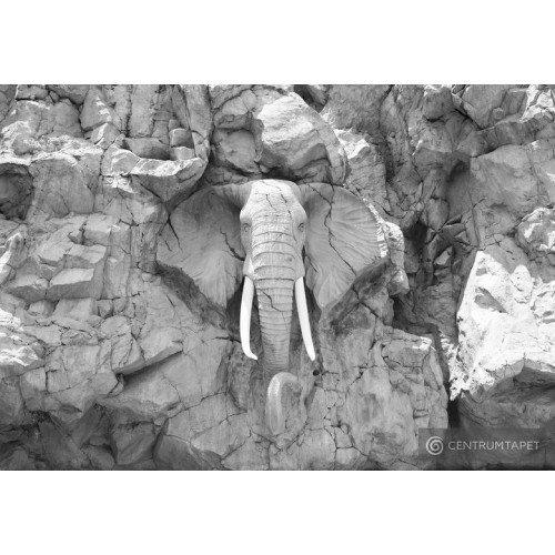 Fototapeta 10116 Kamienny słoń