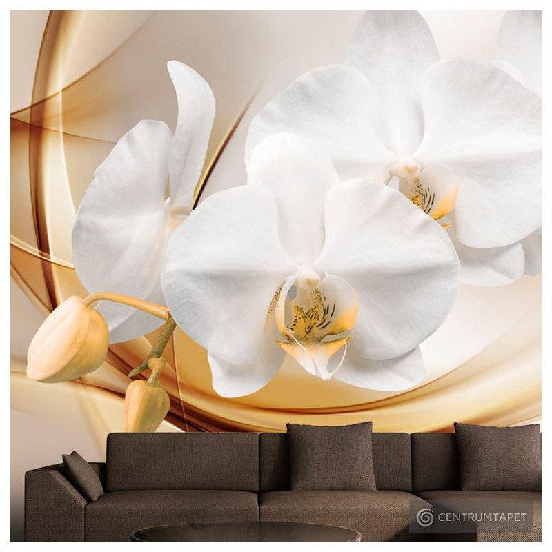 Fototapeta Kwiat orchidei b-A-0213-a-b