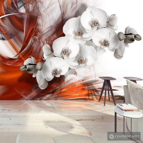 Fototapeta Orchidea w ogniu II b-A-0218-a-b