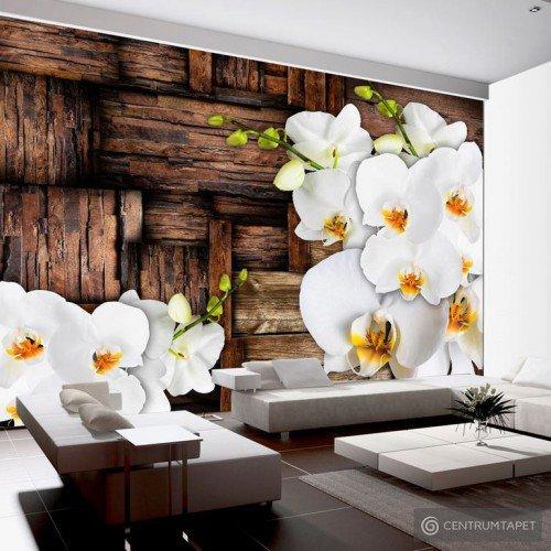 Fototapeta Kwitnące orchidee f-A-0132-a-b