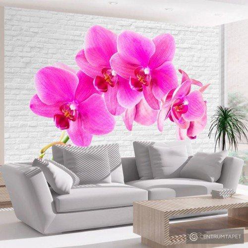 Fototapeta Różowe pobudzenie 10110906-101