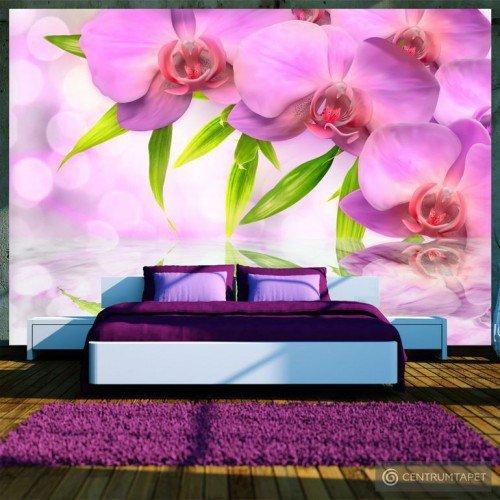 Fototapeta Orchidee w kolorze lila 10110906-27