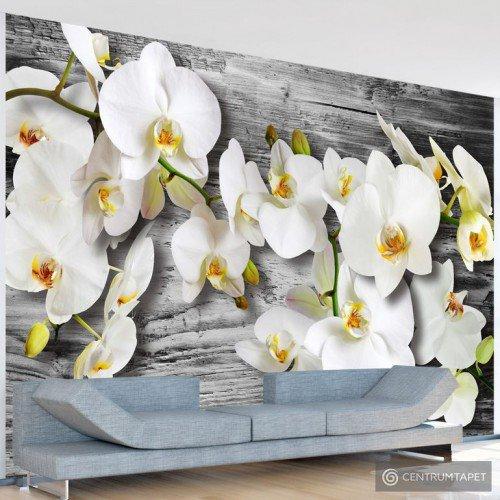 Fototapeta Oziębłe orchidee III 10110906-43