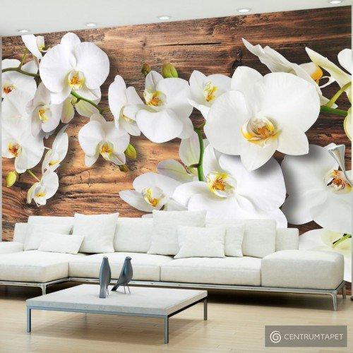 Fototapeta Oziębłe orchidee II 10110906-44