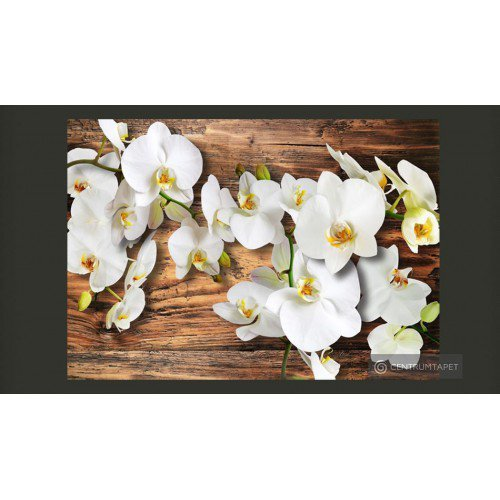 Fototapeta Oziębłe orchidee...