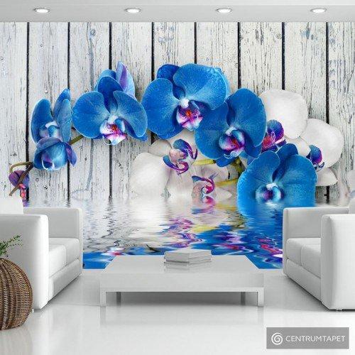 Fototapeta Kobaltowa orchidea 10110906-5
