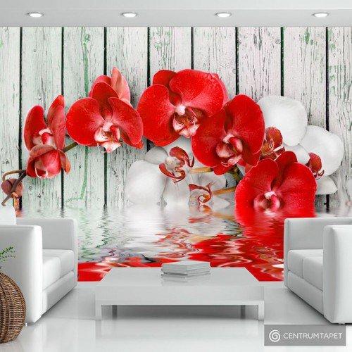 Fototapeta Rubinowa orchidea 10110906-6