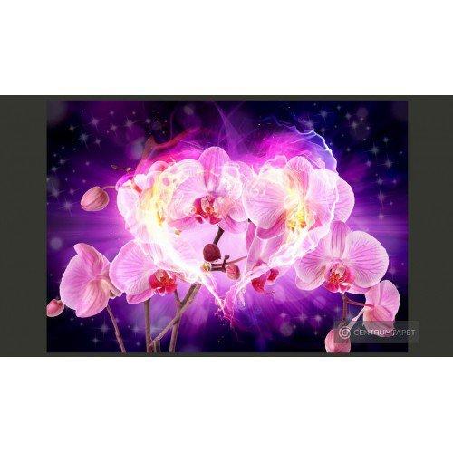 Fototapeta Orchidee w...