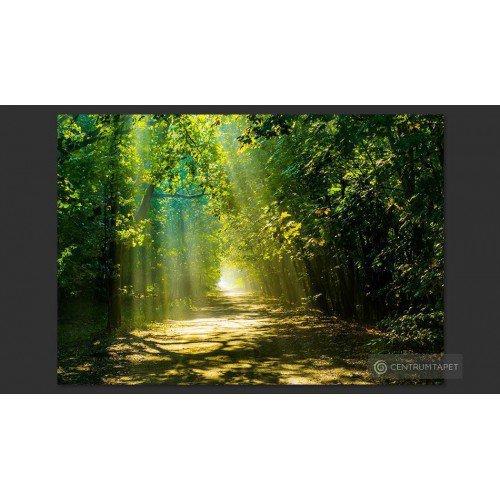Fototapeta Droga w słońcu...