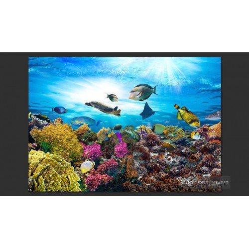 Fototapeta Rafa koralowa...