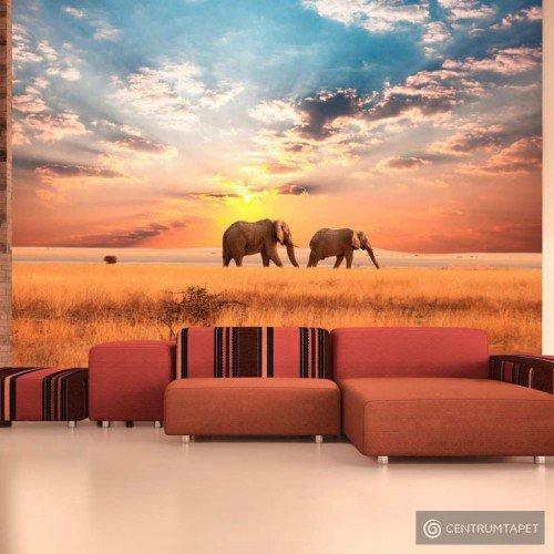Fototapeta Słonie na afrykańskiej sawannie 100403-107