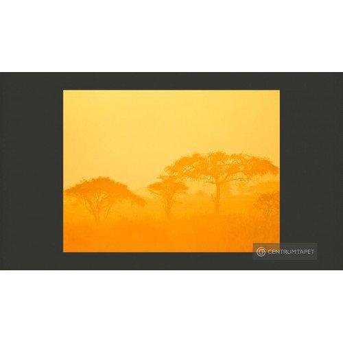 Fototapeta Orange savanna...