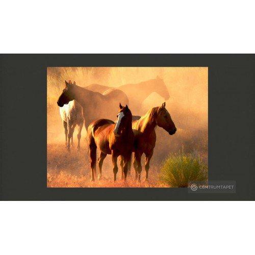 Fototapeta Dzikie konie na...
