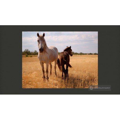 Fototapeta Koń i źrebię...