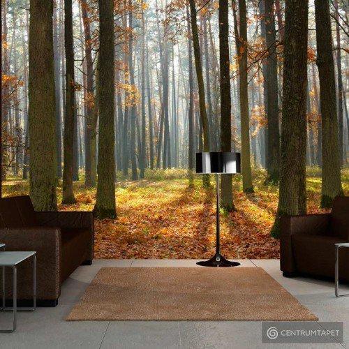 Fototapeta Autumn trees 100403-147