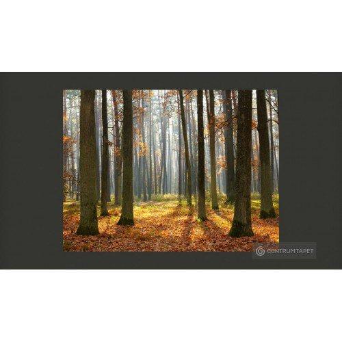 Fototapeta Autumn trees...