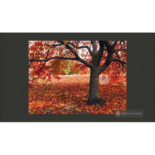 Fototapeta Jesienne drzewo...