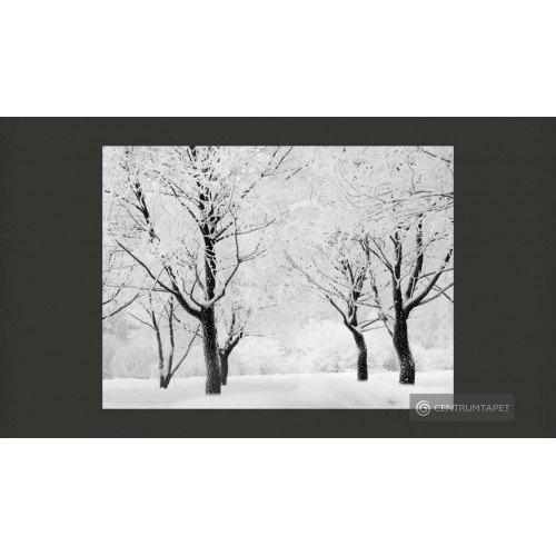 Fototapeta Drzewa - pejzaż...