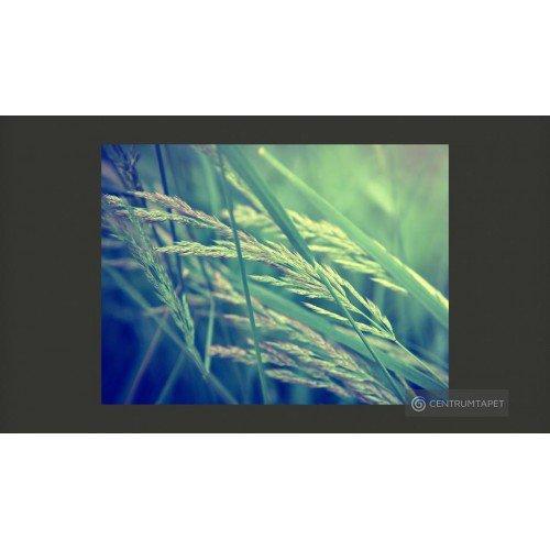 Fototapeta Cereal field...