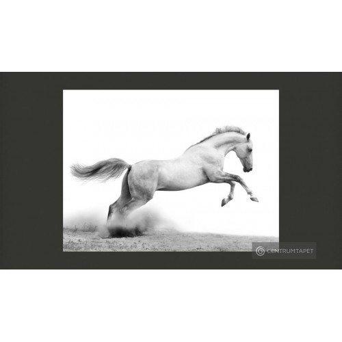 Fototapeta White gallop...