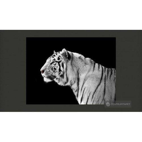 Fototapeta Biały tygrys...