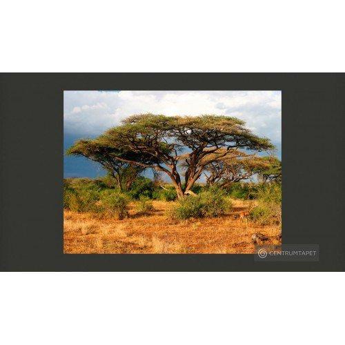 Kenia 100403-206