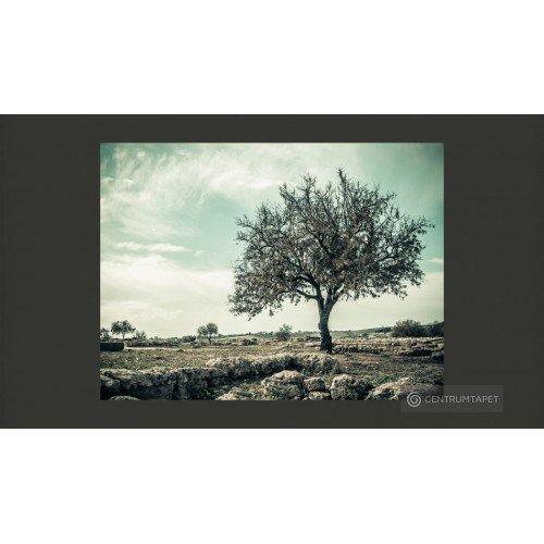 Fototapeta drzewo - vintage...