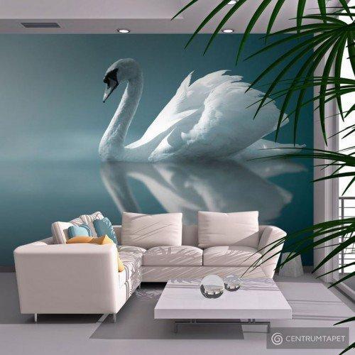Fototapeta Biały łabędź 100403-252