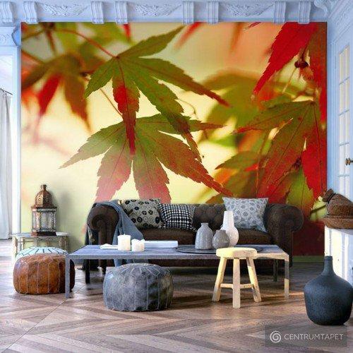 Fototapeta Kolorowe liście 100403-31