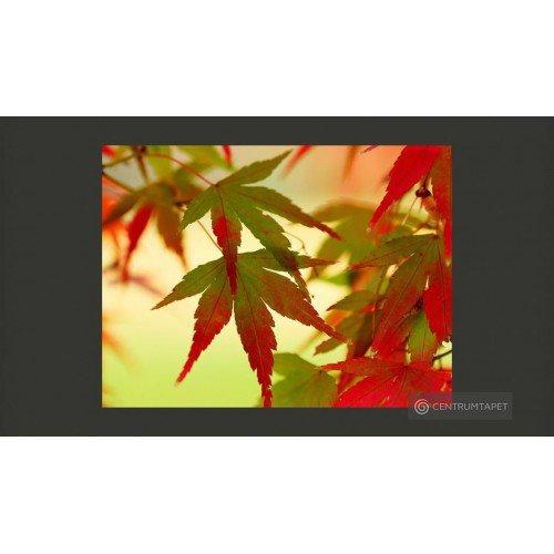Fototapeta Kolorowe liście...
