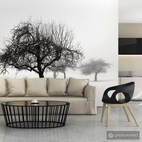 Fototapeta Zima - drzewa 100403-33